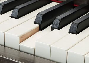 Synthetic Ebony & Ivory Keys